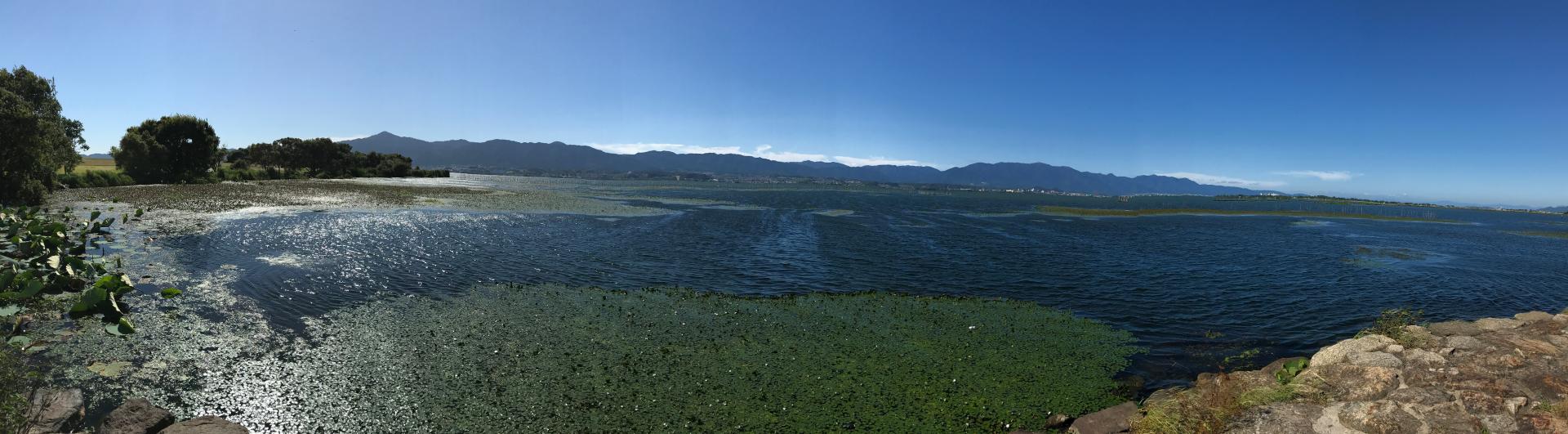 琵琶湖の水草問題